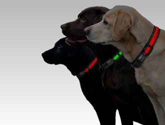 Nightlight LED Collar and Leash