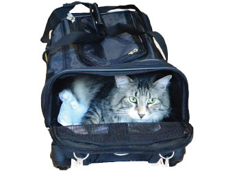 Sherpa American Airlines Pet Carrier from Worldwise