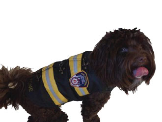 FDNY Jacket from Royal Animals