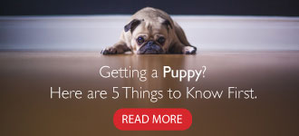 Getting a Puppy Blog