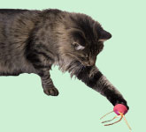 Cat Hunt & Prey Toys