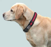 Nightlight LED Collar