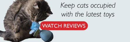 Newest Cat Toy Reviews