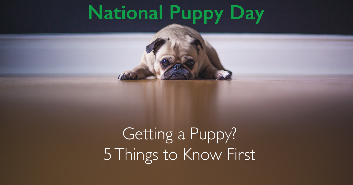 5 Things to Know When Getting a Puppy