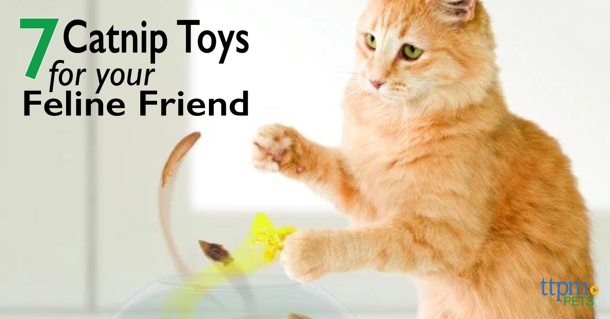 7 Catnip Toys for Your Feline Friend