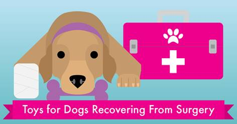 best toys for dogs recovering from surgery