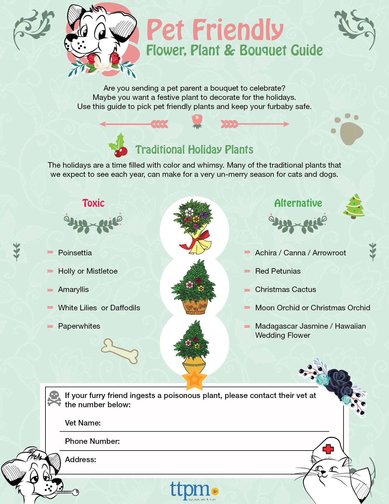 dog and cat safe holiday plants