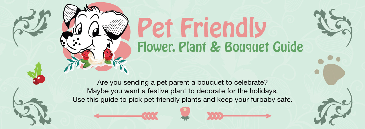 Pet Safe Flowers & Which to Avoid Buying