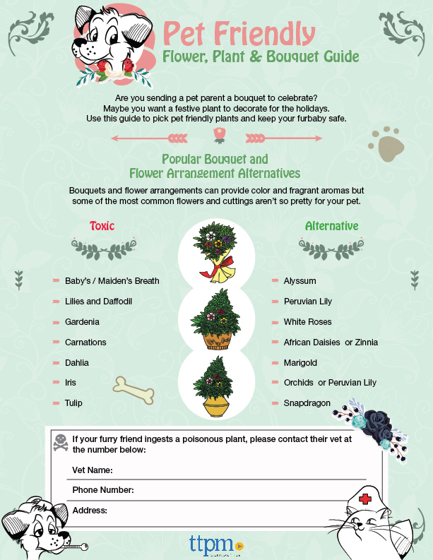 Pet Safe Flowers & Which to Avoid Buying [Printable Infographic] | ecogreenlove