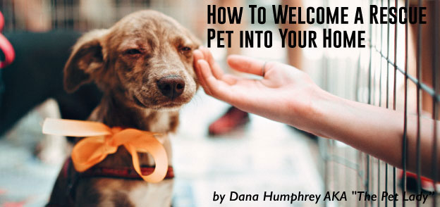 How To Welcome a Rescue Pet into Your Home