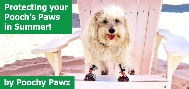 Poochy Pawz - Protecting your Pooch's Paws in Summer!