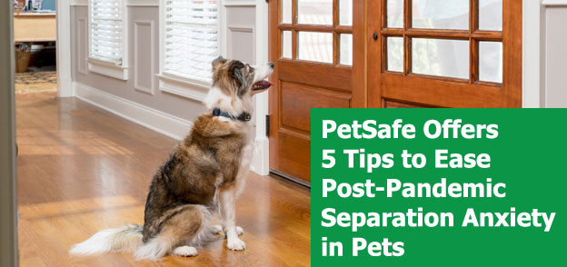 PetSafe Offers 5 Tips to Ease Post-Pandemic Separation Anxiety in Pets