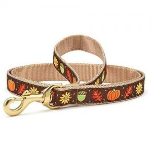 Fall Leash and Collar