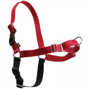 PetSafe, Julius K-9, and Alpine Outfitters Harnesses